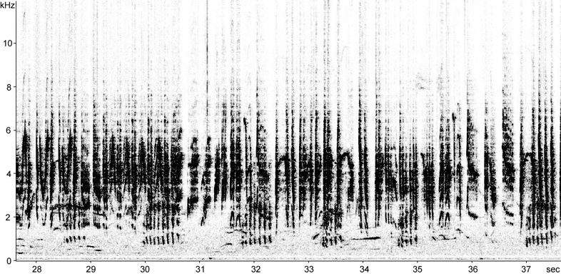 Sonogram of Reed Warbler song