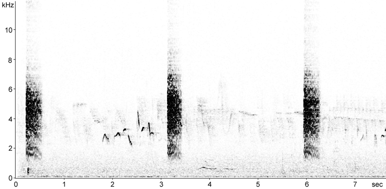 Sonogram of Reed Warbler calls