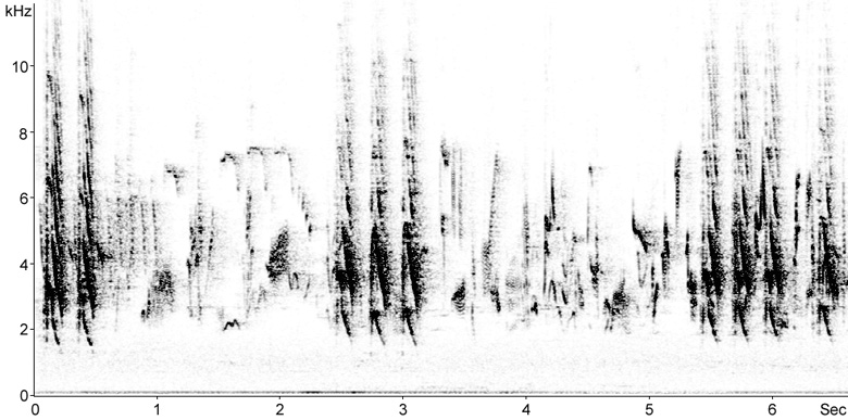 Sonogram of Ring-necked Parakeet calls
