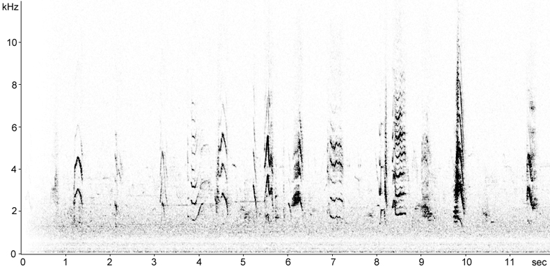 Sonogram of Ring-necked Parakeet song