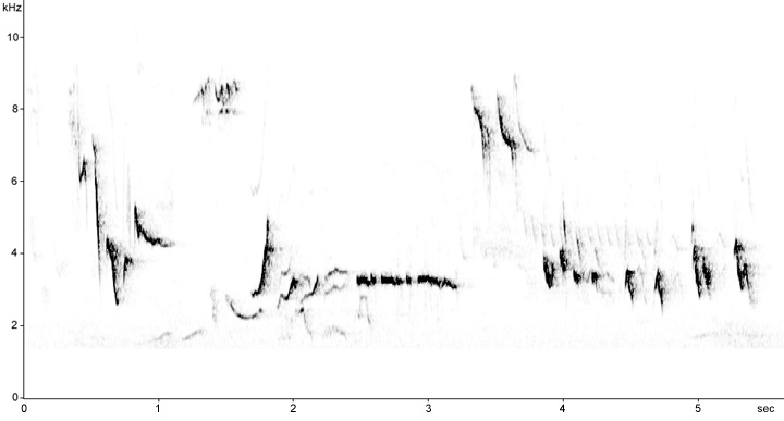 Sonogram of European Robin song