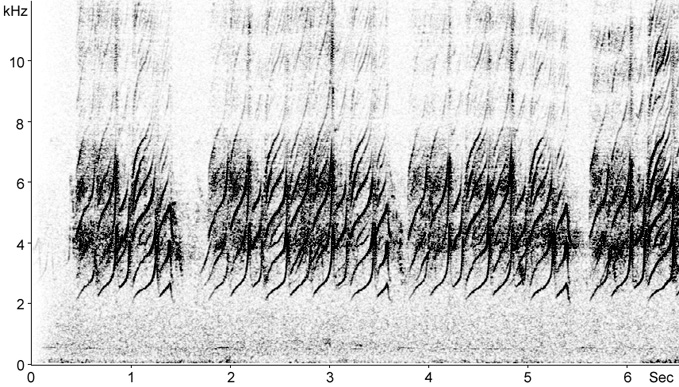 Sonogram of Rock Sparrow calls