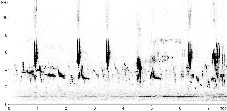 Sonogram of Rufous Bush Robin song