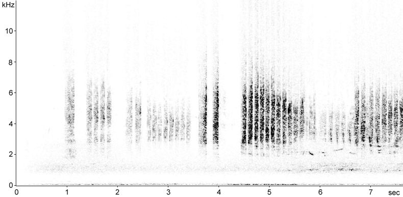 Sonogram of Barn Swallow calls and song