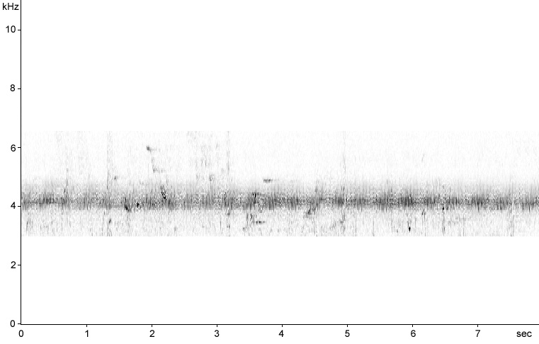 Sonogram of Savi's Warbler song