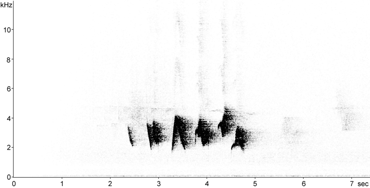 Sonogram of Scarlet Tanager song