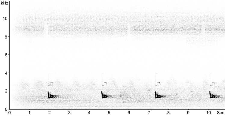 Sonogram of Eurasian Scops Owl duetting song