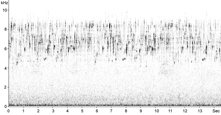 Sonogram of Serin song