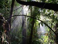 Atlantic Rainforest, Bahia