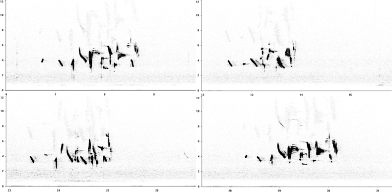 Sonogram of Shore Lark song