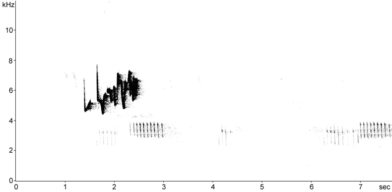 Sonogram of Short-toed Treecreeper song