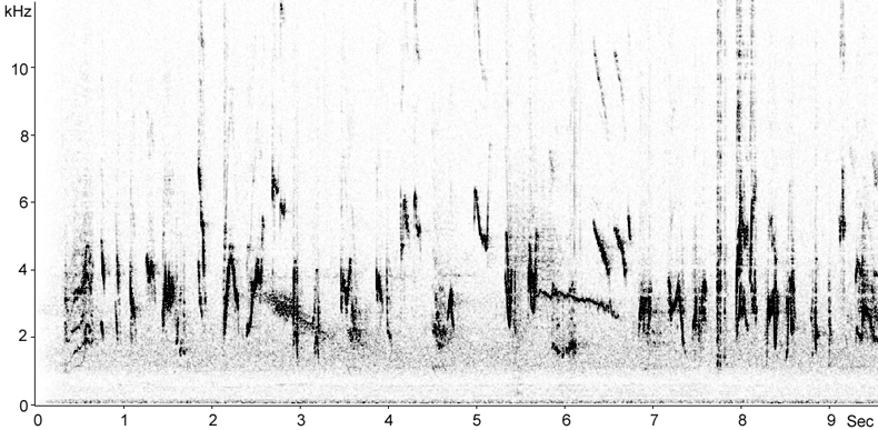 Sonogram of Siberian Rubythroat song
