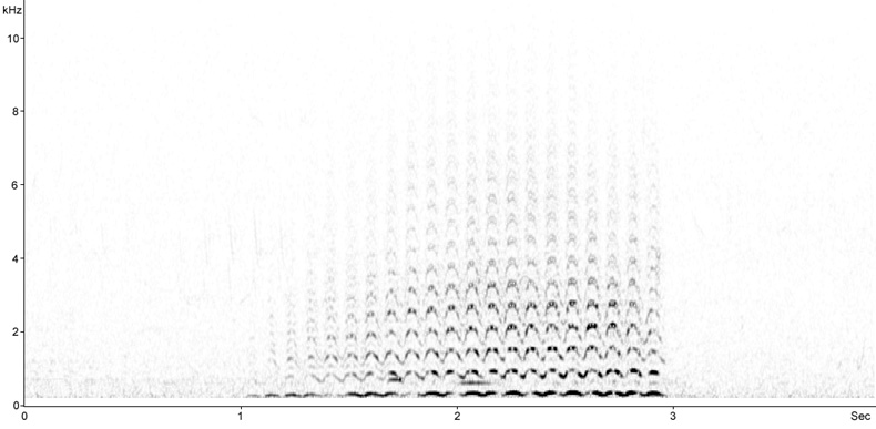 Sonogram of Snipe in drumming aerial display