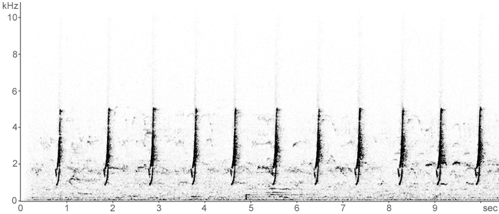 Sonogram of advertising call (territorial song) of male Spotted Crake