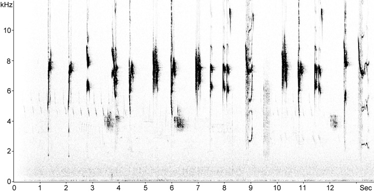 Sonogram of Spotted Flycatcher song