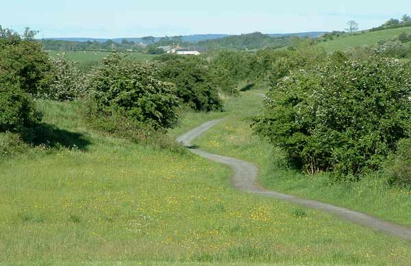 Point 6. View along the line from Springside: warblers, Tree Sparrow, Linnet, Oystercather. (Knockentiber-Springside disused railway line) © Fraser Simpson