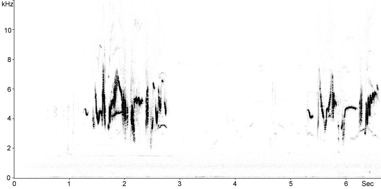 Sonogram of Stonechat song