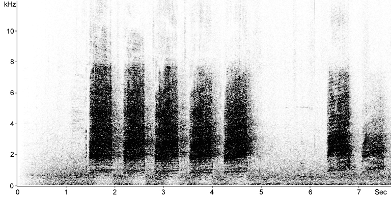 Sonogram of Sulphur-crested Cockatoo calls