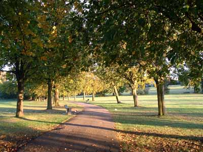 Avenue of Horse Chestnuts