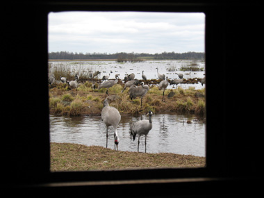 View from inside the Crane photo hide © 2008 Fraser Simpson