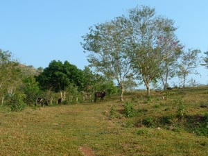 Grazed Slopes, Tarapoto