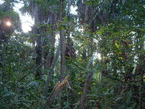 Secondary Forest, Tarapoto