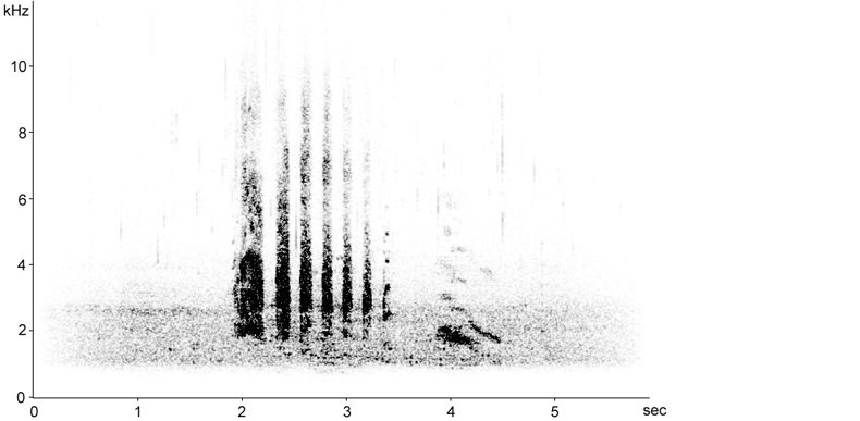 Sonogram of female Eurasian Teal call