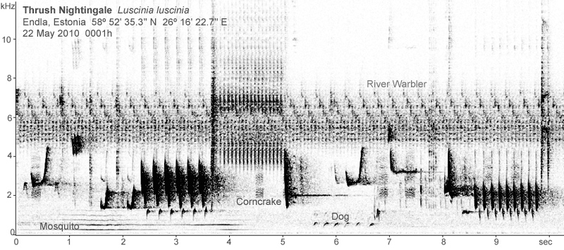 Sonogram of Thrush Nightingale song