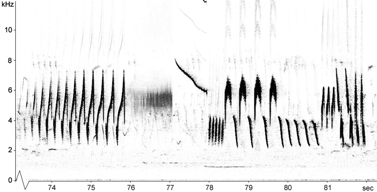Sonogram of Tree Pipit flight song
