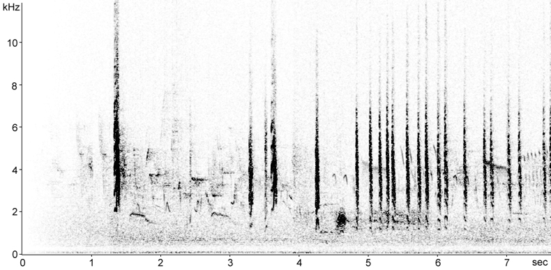 Sonogram of Tree Sparrow calls