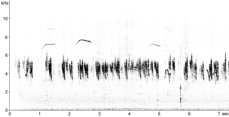 Sonogram of Tree Swallow calls