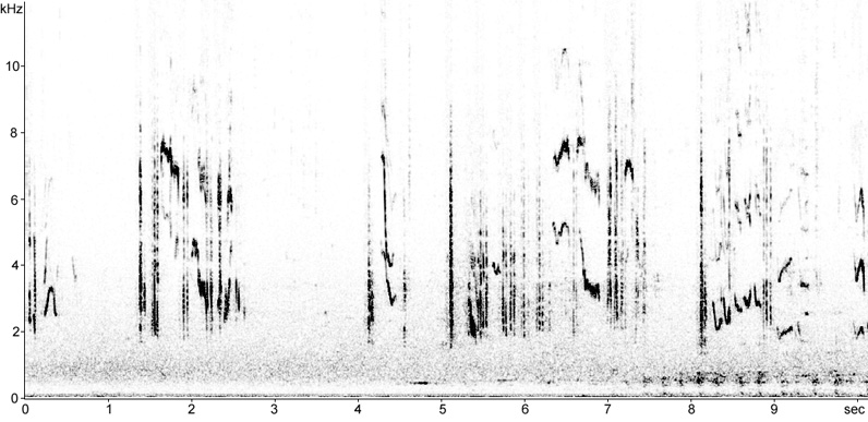 Sonogram of Tristram's Warbler song