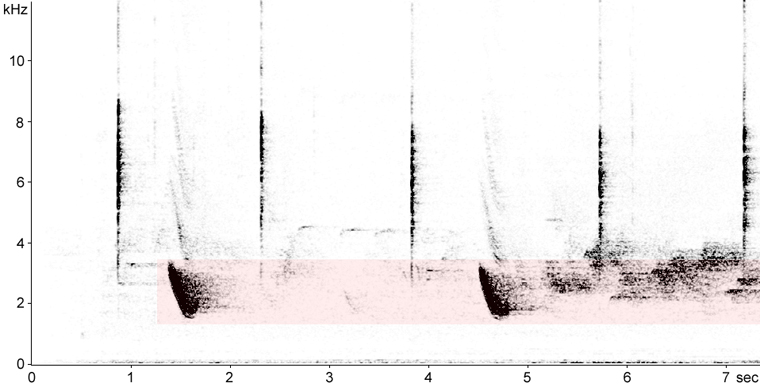 Sonogram of Veery calls