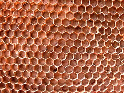 Wasp Nest Honeycomb