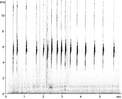 Sonogram of White-crowned Sparrow calls