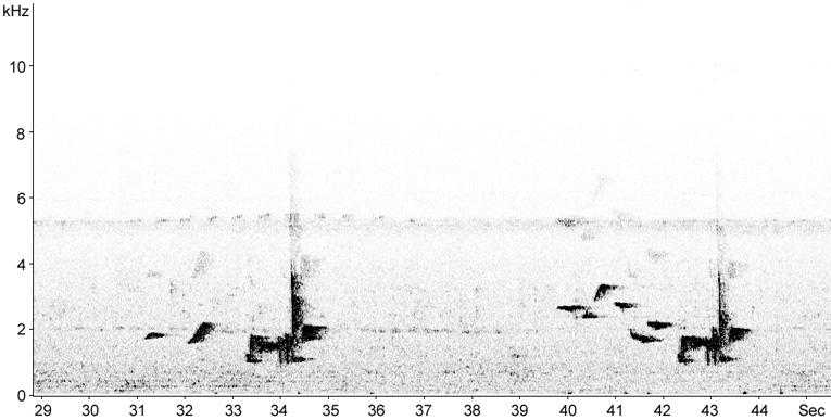 Sonogram of White-rumped Shama song