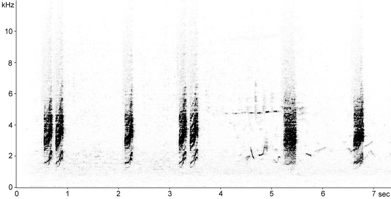 Sonogram of Whitethroat calls