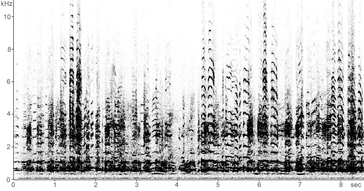 Sonogram of Whooper Swan calls