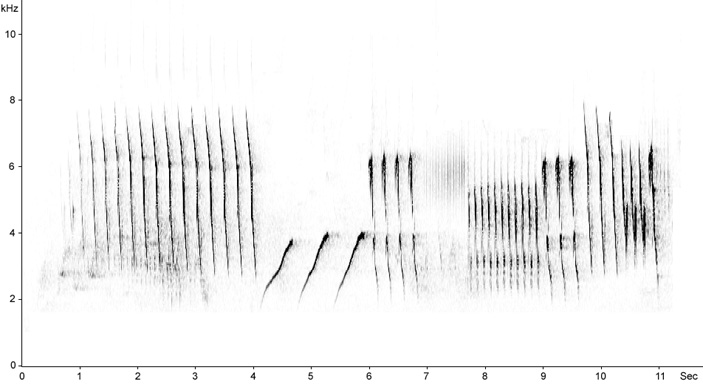 Sonogram of Woodlark song