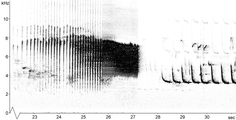 Sonogram of a Wood Warbler song