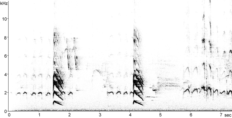 Sonogram of Yellow-bellied Sapsucker Begging calls nestlings and mewing contact call