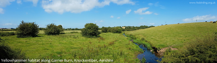 Yellowhammer habitat along Garrier Burn, Knockentiber, Ayrshire � Fraser Simpson  �  www.fssbirding.org.uk