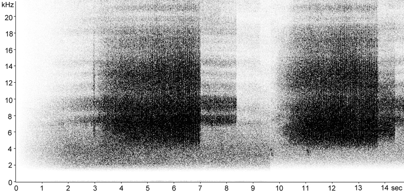 Sonogram of Bow-winged Grasshopper stridulation