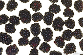 Brambles (Blackberries)