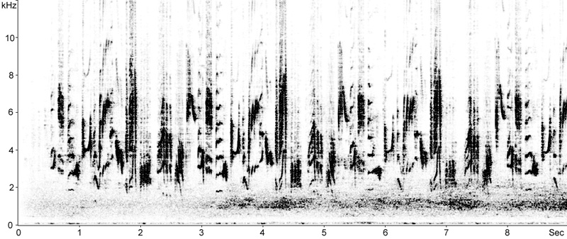 Sonogram of Melodious Warbler  (Hippolais polyglotta) song © Fraser Simpson