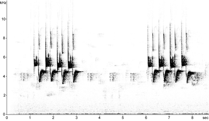 Sonogram of Coal Tit song