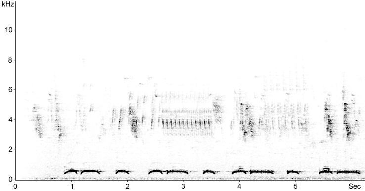 Sonogram of Collared Dove song