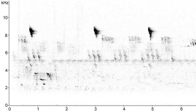 Sonogram of Firecrest call
