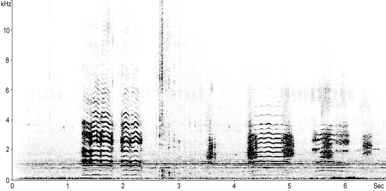 Sonogram of calls from a Glossy Ibis