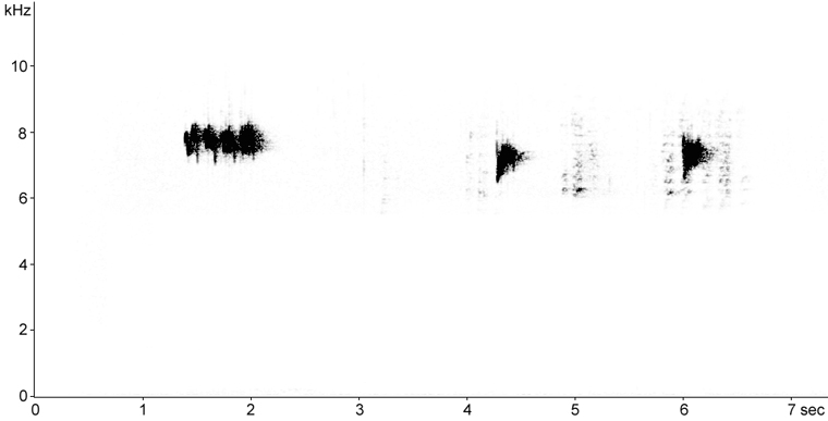 Sonogram of Golden-crowned Kinglet call